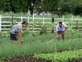 Casal transformou terreno baldio em horta urbana orgânica em Palmas, no Tocantins