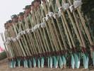 China mobiliza 60 mil soldados para plantar árvores em uma área do tamanho da Irlanda