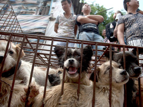 Shenzhen se torna a primeira cidade chinesa a proibir o consumo de cães e gatos pós coronavírus