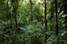 Nestlé e SOS Mata Atlântica vão plantar 1 milhão de árvores no Brasil