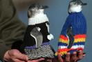 Ong veste pinguins com suéteres para protegê-los do derramamento de óleo
