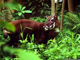 O Vietnã criou uma nova reserva natural que abriga 40 espécies globalmente ameaçadas de extinção