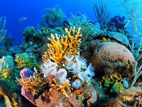 Cuba aprova reforma drástica nas leis de pesca para proteger os recifes de corais e sua fauna marinh