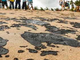 Mais de 600 toneladas de resíduos foram coletadas de praias do nordeste afetadas pelo óleo