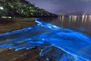 Fauna marinha volta a iluminar praia de Acapulco, no México, após 60 anos