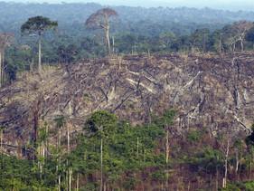 Noruega se torna o primeiro país do mundo a proibir o desmatamento
