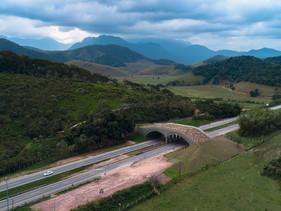 Trecho da BR-280 em SC terá segundo viaduto de travessia de fauna do Brasil