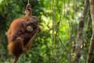 Peru se compromete a acabar com o desmatamento causado pelo óleo de palma até 2021