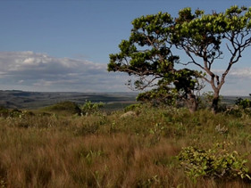 Áreas de conservação e proteção foram ampliadas no Brasil nos últimos dois anos