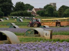 Dois irmãos fazendeiros da Inglaterra plantaram mais de 200.000 m² de flores ricas em néctar para al