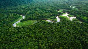 Amazon anuncia que vai restaurar florestas na Amazônia e ajudar agricultores no Pará