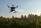 Empresa canadense se compromete a plantar 1 bilhão de árvores utilizando drones