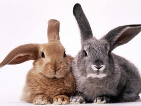 Austrália proíbe testes de cosméticos em animais em todo o país