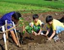 Sob uma nova lei, os estudantes nas Filipinas devem plantar 10 árvores para poderem passar de ano