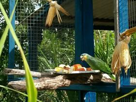 Operação realizada pelo Ibama devolveu mais de 200 aves vítimas do tráfico à natureza