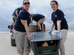 Aquário de New England devolveu ao oceano 14 tartarugas marinhas resgatadas e ameaçadas de extinção
