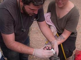Jovem de 20 anos liderou resgate e cuidado de animais feridos no Pantanal