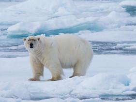 Canadá transformou área do Ártico em um santuário de proteção marinha tão grande quanto a Alemanha