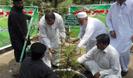 """Foram plantadas 1,5 milhões de árvores ontem como parte da campanha """"Plant for Pakistan"""" q"""