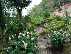 Moradores do Morro do Vidigal transformaram depósito de lixo em parque ecológico