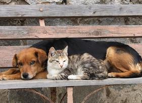 Senado aprova aumento da pena por maus-tratos contra cães e gatos