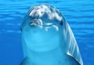 Canadá aprova projeto de lei que proíbe o cativeiro de golfinhos, baleias e botos