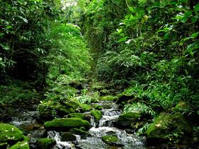 População poderá opinar em planos da Secretaria do Meio Ambiente para enfrentar mudanças de clima