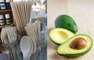 Caroço de abacate vira talher biodegradável no México