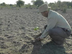Indiano planta floresta sozinho e impede sua ilha de afundar
