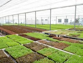 Mercedes-Benz inaugura Fazenda Urbana dentro de sua fábrica em SP