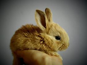 Entrou em vigor na Califórnia a lei que proíbe a venda de qualquer produto testado em animais