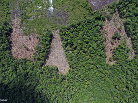 Noruega oferece pagar US $ 150 milhões como ajuda para a Libéria acabar com o desmatamento de suas f