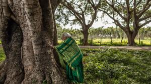 """""""Mãe das árvores"""": Conheça a indiana de 109 anos que já plantou mais de 8 mil árvores"""