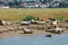 Rio Tamisa em Londres agora é o lar de 138 filhotes de focas, 60 anos após o rio ser declarado &quot
