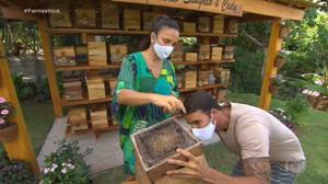 Conheça as abelhas Uruçu, espécie sem ferrão que Ivete Sangalo cria em casa