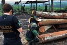 """Ibama faz megaoperação """"Amazônia Soberana"""" em combate ao desmatamento ilegal"""