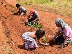 Sistemas agroflorestais geram renda para pequenos agricultores no Distrito Federal