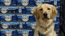 Cervejaria Busch, nos EUA, está dando três meses de cerveja grátis para pessoas que adotarem um anim