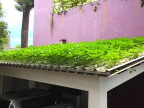 Agrônomo brasileiro cria primeira telha hidropônica do mundo
