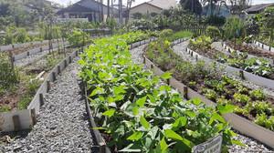 Moradores de Joinville querem plantar alimentos em terrenos baldios