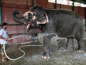 Índia inaugura o primeiro hospital para elefantes do planeta