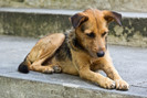 Prefeito de Seul planeja fechar os matadouros de cães remanescentes da cidade