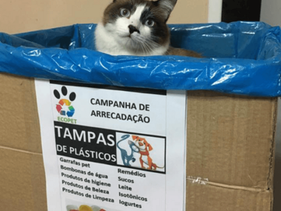 Projeto utiliza reciclagem de tampinhas para financiar a castração de pets sem lar