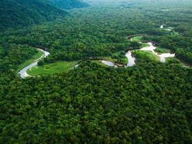 Grupo Natura &Co lança plataforma de monitoramento da Amazônia