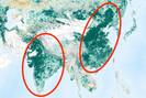 NASA afirma que a Terra está mais verde hoje do que há 20 anos, graças à China e Índia