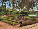 Detentos cultivam horta em presídio do Sul de Minas Gerais e doam alimentos para instituições