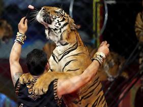 Apresentação de animais selvagens será proibida em circos na França