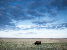 Canadá anuncia investimento de25 milhões de dólares para conservar e restaurar suas pradarias
