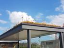 Cidade da Holanda cobre centenas de paradas de ônibus com plantas que ajudam a salvar as abelhas