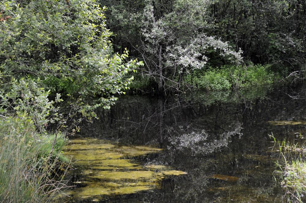 Bord du lac à la tourbière